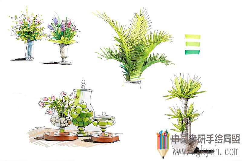 2013邓蒲兵手绘植物马克笔表现