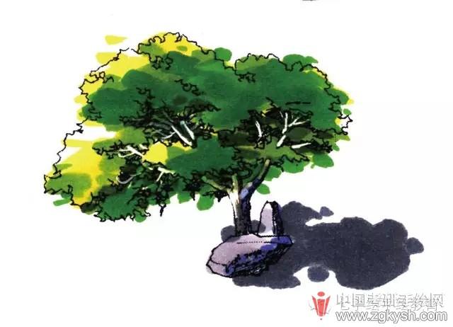 风景园林手绘快题 69 【七手绘小七课堂】每周学点手绘——景观植物